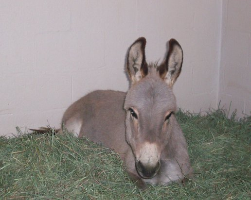 boy-george-donkey-1