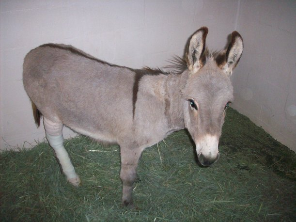 boy-george-donkey-7